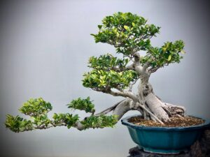 bonsai budama