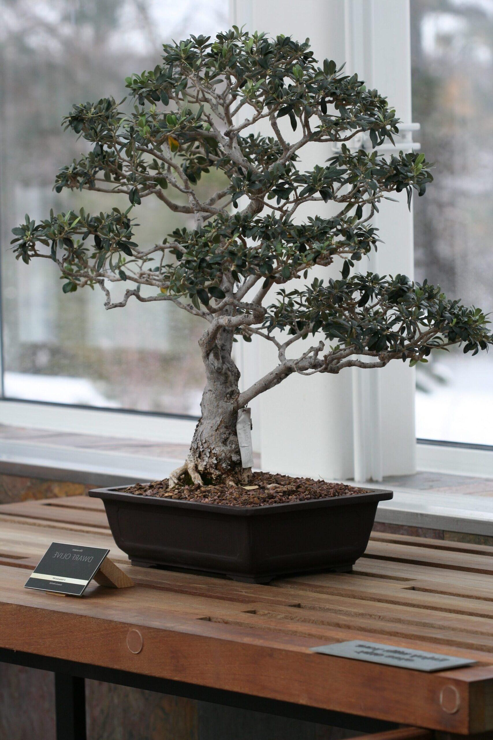 bonsai detayları